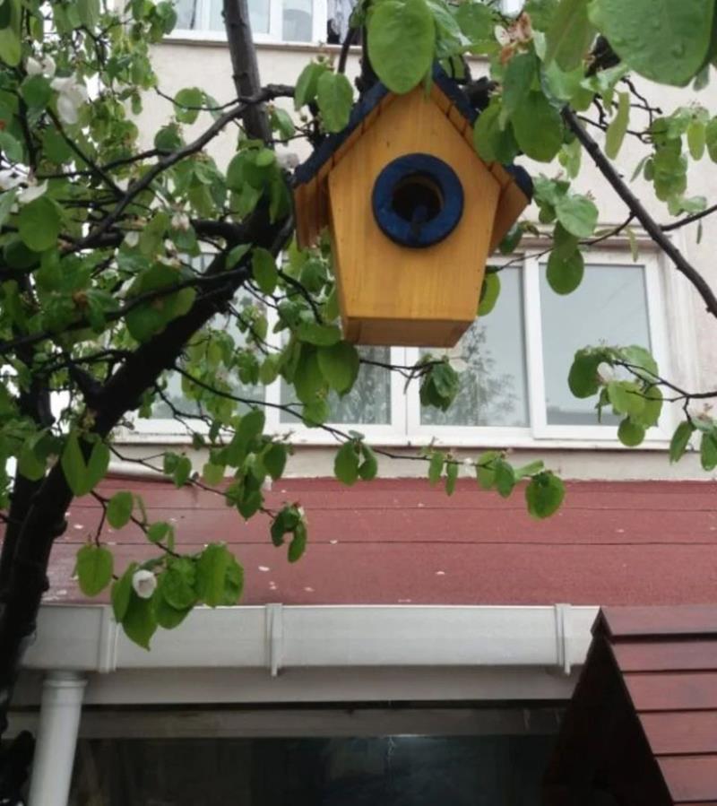 Kuş yuvasi resmi
